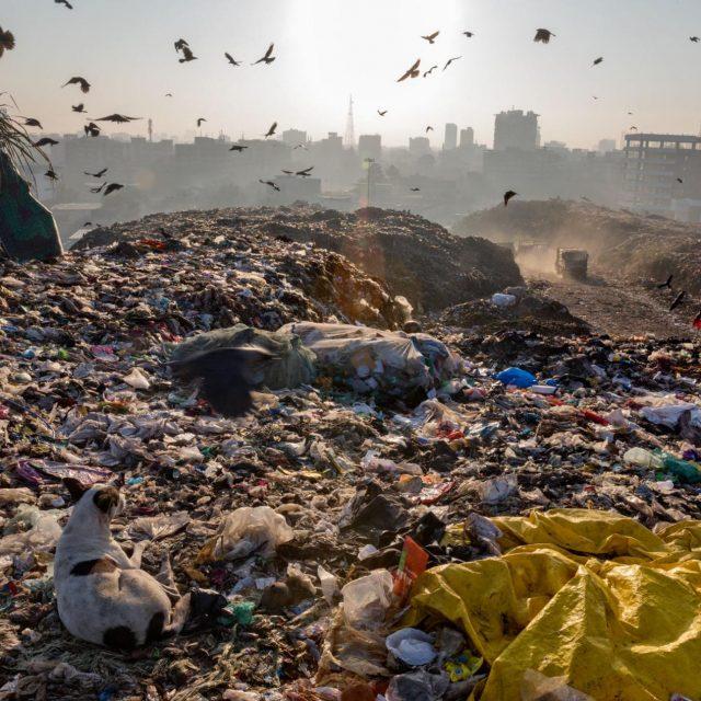 plastic-waste-single-use-worldwide-consumption-7.adapt_.1900.1